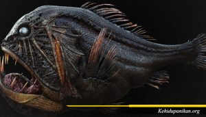 Ikan Fangtooth