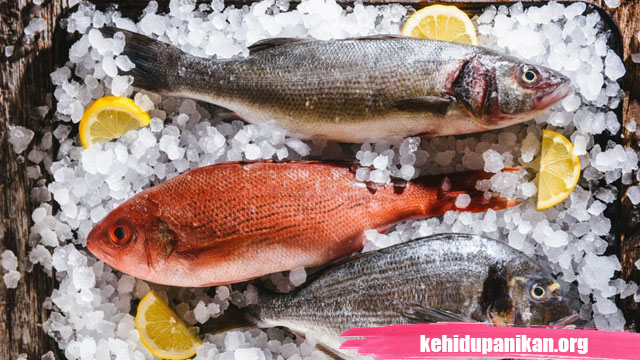 ikan bergizi