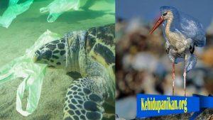 Bagaimana Sampah Dapat Membunuh Hewat Laut Dan Burung