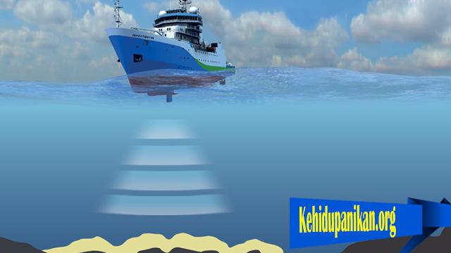 Suara Terlalu Kuat Dapat Rusak Populasi Ikan DI Laut