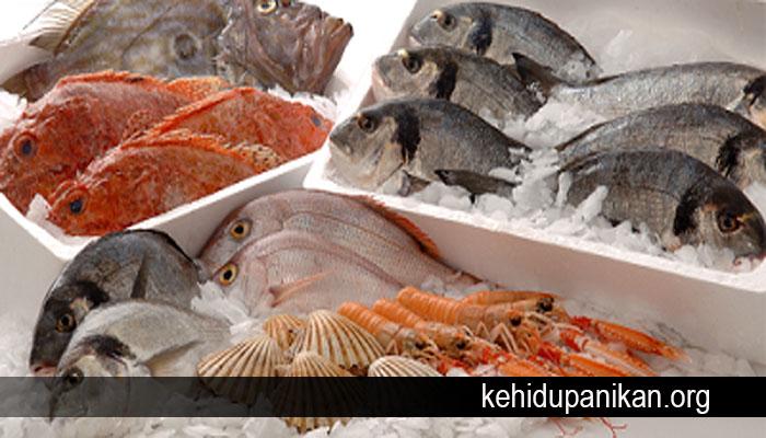 Mengapa Ikan Mudah Membusuk Meski Didalam Kulkas