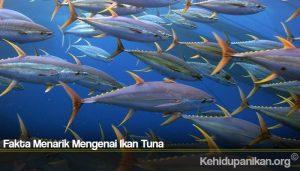 Fakta Menarik Mengenai Ikan Tuna