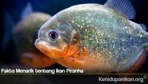 Fakta Menarik tentang Ikan Piranha