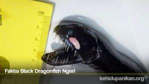 Fakta Black Dragonfish Ngeri