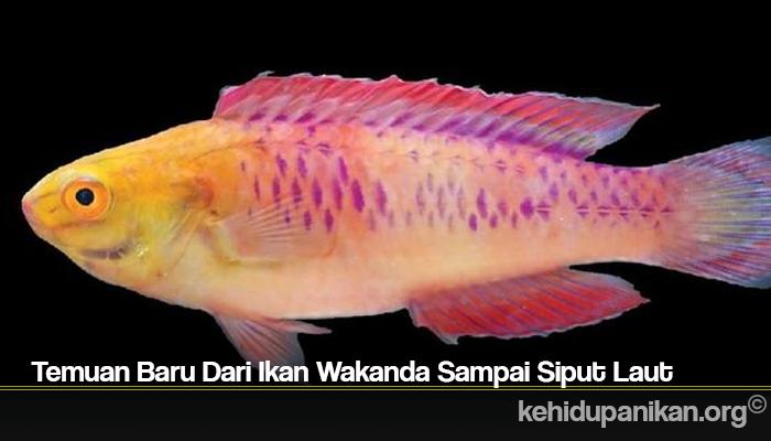 Temuan Baru Dari Ikan Wakanda Sampai Siput Laut