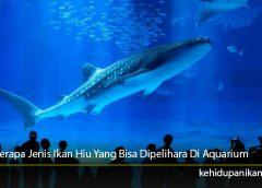 Beberapa Jenis Ikan Hiu Yang Bisa Dipelihara Di Aquarium