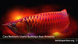 Cara-Berbisnis-Usaha-Budidaya-Ikan-Arwarna