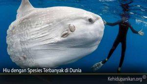 Hiu dengan Spesies Terbanyak di Dunia