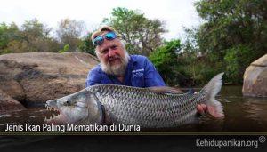 Jenis Ikan Paling Mematikan di Dunia