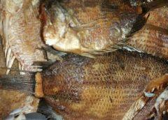 Jenis-Jenis Ikan Asin