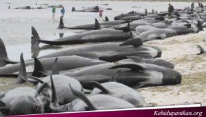 Heboh Ikan Jumbo TErdampar Di California