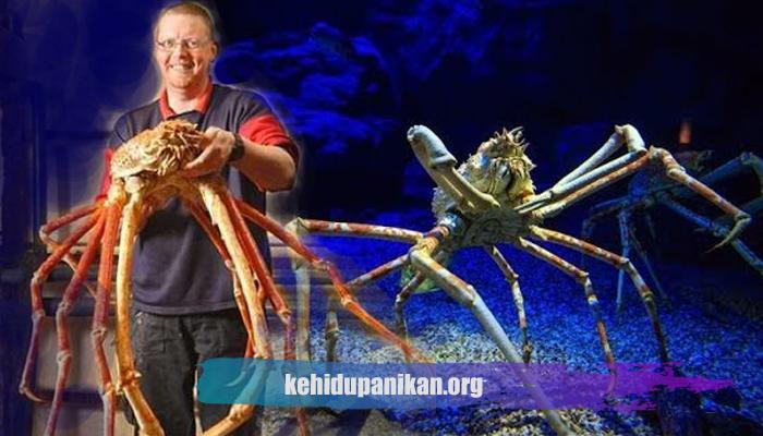 Ikan Laut Dalam Kepiting Laba-laba