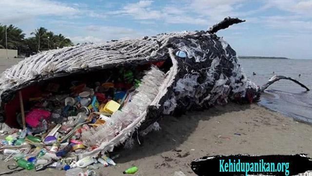 Taukah Kalian Sejak Kapan Sampah Pelastik Berada Di Laut