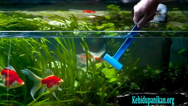Tips Cara Membersihkan Aquarium