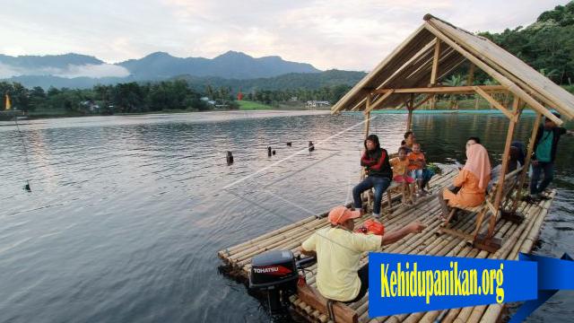 Mendadak Mati Ikan Di Danau Perintis Gorontalo
