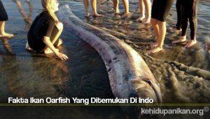Fakta Ikan Oarfish Yang Ditemukan Di Indo