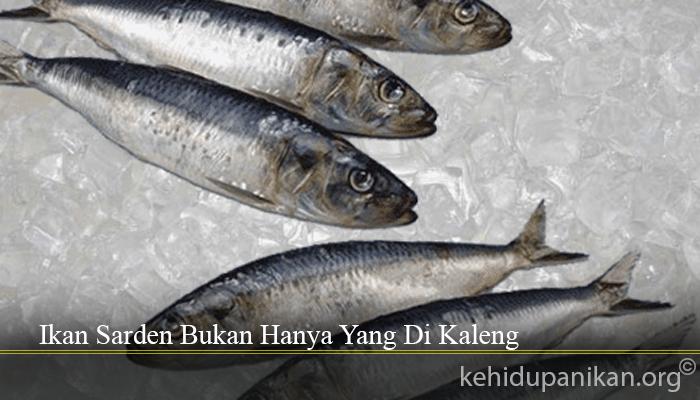 Ikan Sarden Bukan Hanya Yang Di Kaleng