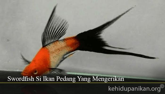 Swordfish Si Ikan Pedang Yang Mengerikan