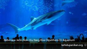 Beberapa-Jenis-Ikan-Hiu-Yang-Bisa-Dipelihara-DI-Aquarium