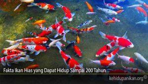 Fakta Ikan Hias yang Dapat Hidup Sampai 200 Tahun
